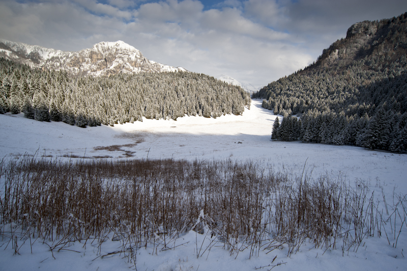 La foresta boreale nelle Alpi Orientali.